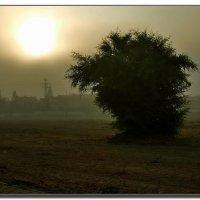 Туманное утро. :: Leonid Korenfeld