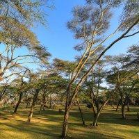 На рассвете в национальном парке Найваша,Кения. :: Ольга Петруша
