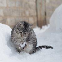 Игра в снежки :: Тигран Хачатрян
