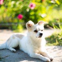 Собачья важность :: Valentina Zaytseva