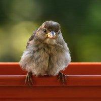 малыш :: linnud