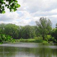 Природа летом богата сочными зелеными красками :: Маргарита Батырева