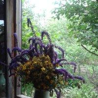 Лекарственные травы :: наталия