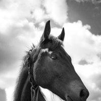 Отчего кони не летают?.. :: Наталья Костенко