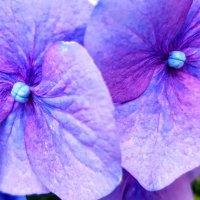 В цвету... :: Tatjana