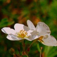 мелкий цветок. :: Пётр Беркун