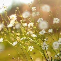 Цветочки :: Кристина Щукина