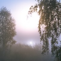 туман на озере :: Василий Иваненко
