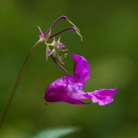 Необычный цветок :: Алексей Строганов