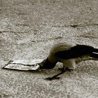 Любопытная Ворона :: Aleks Ben Israel
