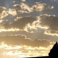 Рассвет в июле... :: Тамара (st.tamara)