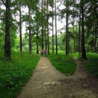 О пользе прогулок в парке после дождя и перед дождем :: Андрей Лукьянов