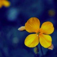 цветы :: Юлия Морец