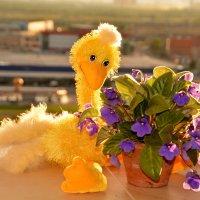 шутка ли цветы поставили.......... :: Валентина Папилова