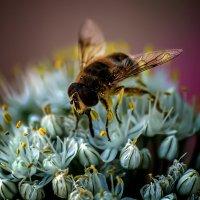 Рабочая пчела :: Валерьян Бек (Хуснутдинов)