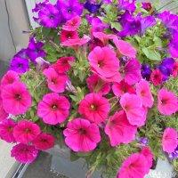 Горшочек с цветами :: Мария К