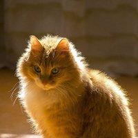 солнечный котик) :: Юлия Маркелова