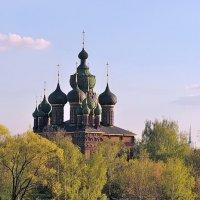 Церковь Иоанна Предтечи в Ярославле, в обрамлении весенней листвы :: Николай Белавин