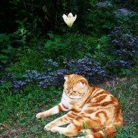 Любитель цветов :: татьяна