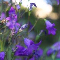 Цветок :: Ксения Трифонова
