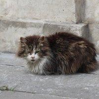 Бездомный. :: Маргарита ( Марта ) Дрожжина