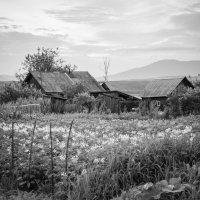 В деревне! :: Ирина Антоновна