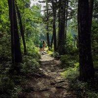 на лесной тропе :: Станислав Пономарчук