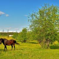 Коняшка на лугу! :: Илья Магасумов