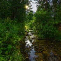 Лесная речка :: vladimir Bormotov