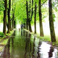 дождь :: Людмила Комарова