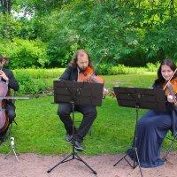 Под музыку Вивальди... :: Tatiana Markova