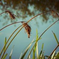 Летние травы :: Василиса Кулагина