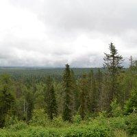 уральская тайга-парма :: petyxov петухов