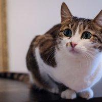 Девочка с изумрудными глазами ^^ :: Елена Яшнева