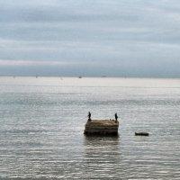 Вода,вода,кругом вода... :: Елена Строганова