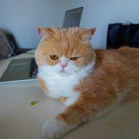 В доме, где есть кошка, других украшений не нужно..... :: Galina Dzubina