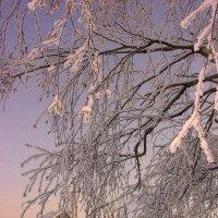 зимние кружева :: леонид логинов
