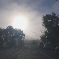 Утро .туман .роса :: Николай Сапегин