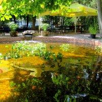 Пруд с разноцветными рыбками :: Нина Бутко