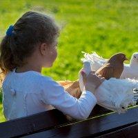 Любовь и голуби :: Алексей Головин
