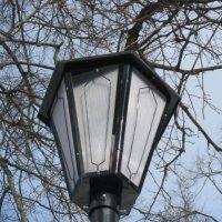 Уличный фонарь :: Дмитрий Никитин