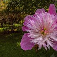 Цветок в парке 21. :: Василий Ярославцев
