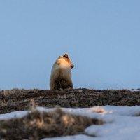 Ушки на макушке. :: Юрий Харченко