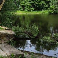 пейзаж с упавшей ивой :: sv.kaschuk