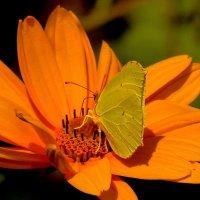 жёлтая в оранжевом :: Александр Прокудин