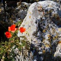 Крепость Розафа: цветы и камни :: Gal` ka