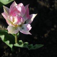 Нежный цветок :: Алёна ...