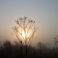 Туман... :: Алла ZALLA