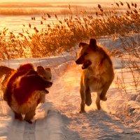 Собачья радость :: Barguzin_45 Иваныч