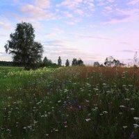Цветочная поляна :: Павлова Татьяна Павлова